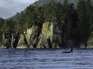 orca-2