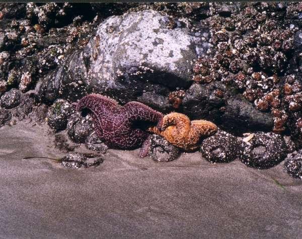 Starfish-600.jpg